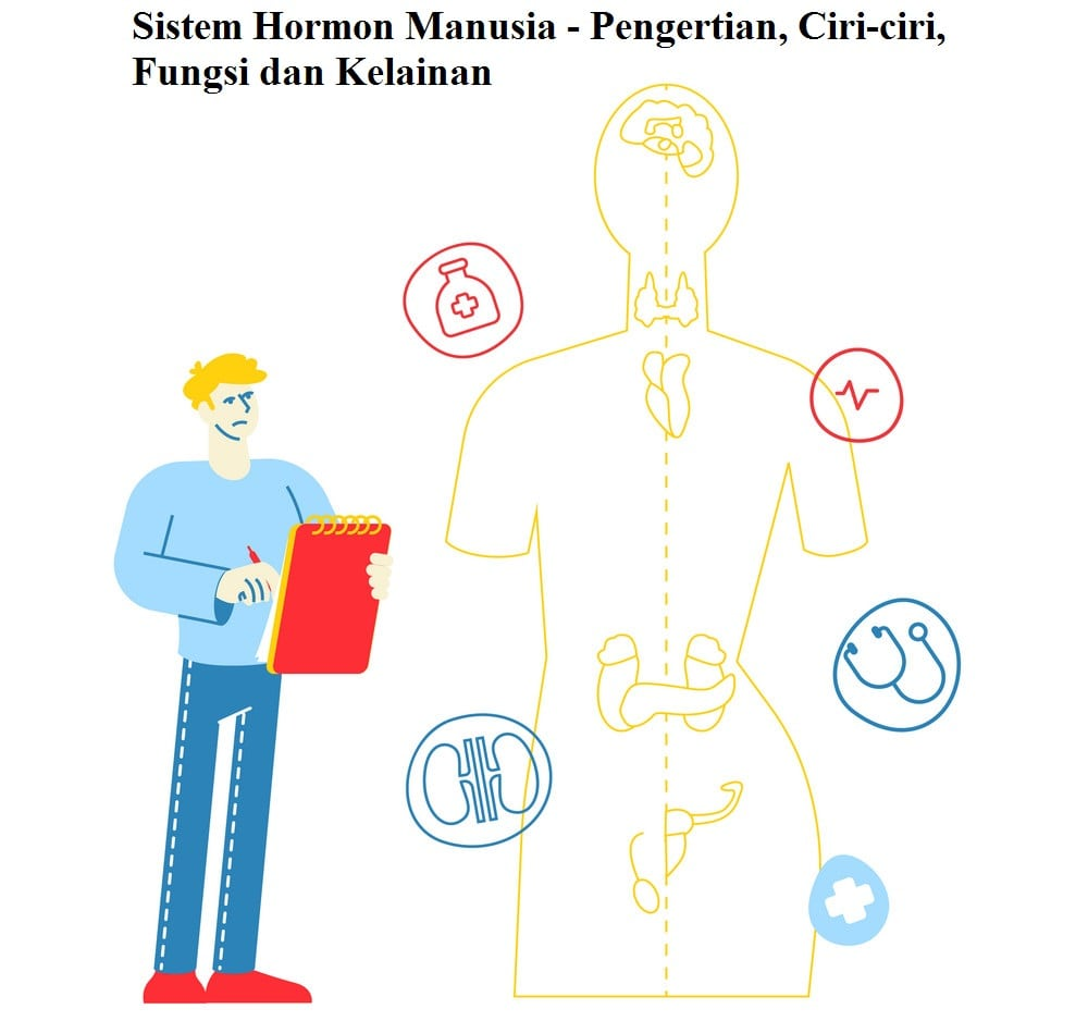 Definition, Characteristics, Functions and Abnormalities of the Human Hormone System